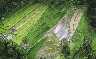 Vue champs vertes de haut