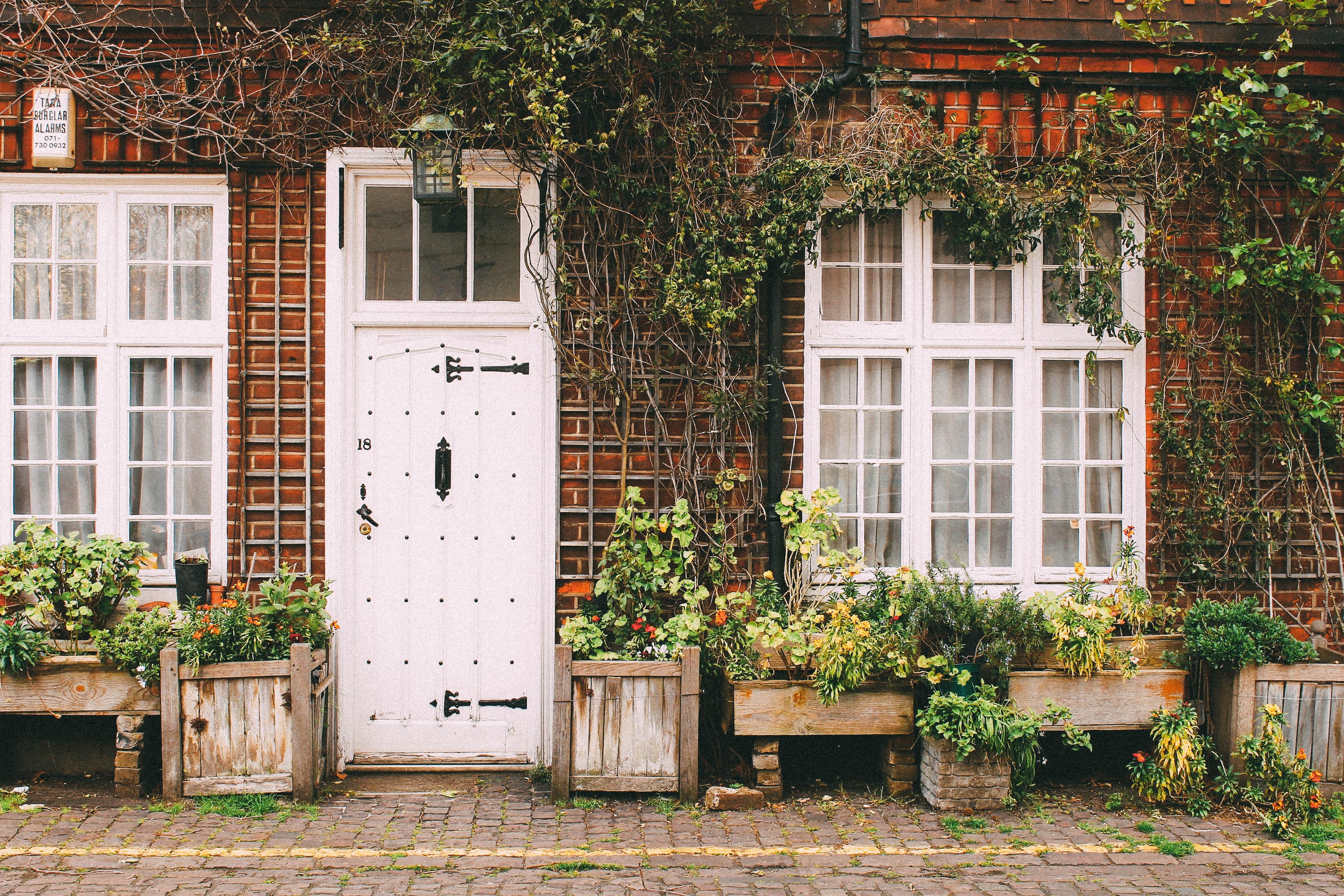 Maison avec plantes vertes