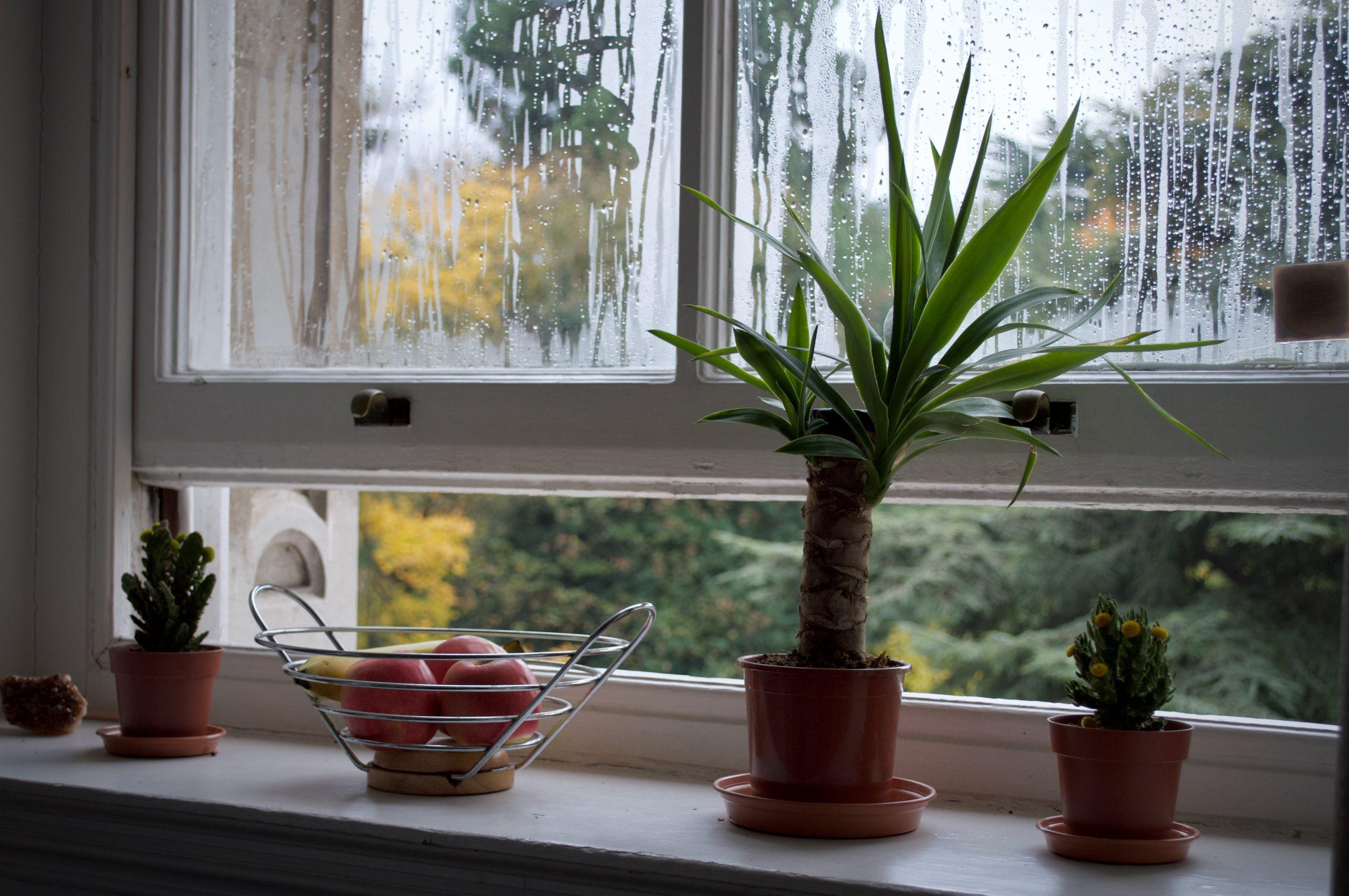 Fenêtres habitat passif